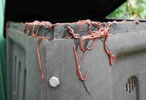 Worms Escape Bin