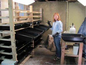 mary-ann-at-work-vermicomposting