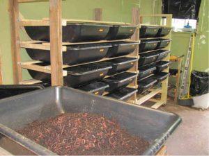 vermiculture-grow-bins