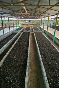 Indian vermicomposting operation