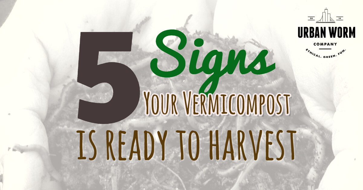 How Do I Know If My Vermicompost is Ready to Harvest?