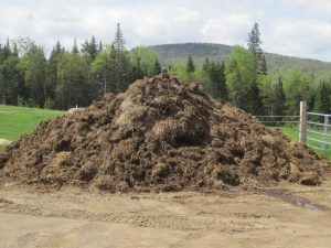 pile of horse manure
