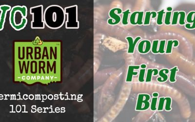 How to Start a Worm Bin the Right Way: Vermicomposting 101