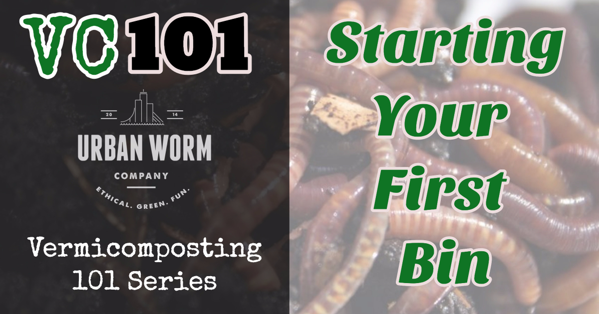 Vermicomposting 101: How to Start a Worm Bin