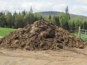 Horse manure for worm bedding