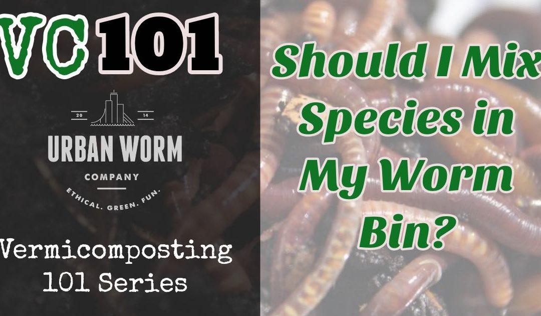 Vermicomposting 101: Should I Mix Worm Species in My Worm Bin?