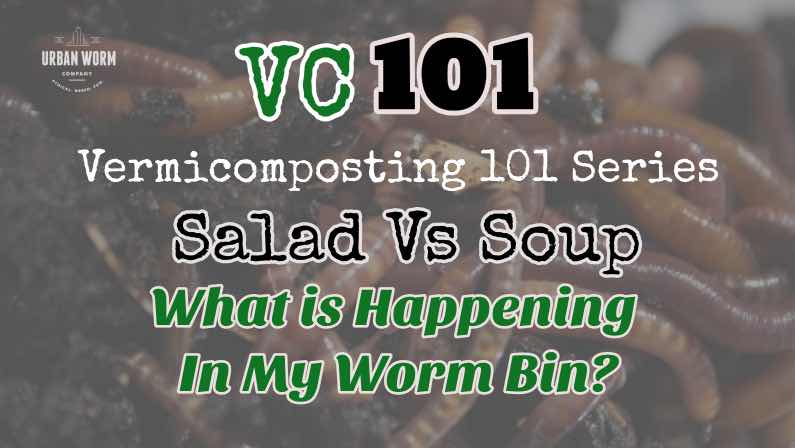 Vermicomposting 101: What Happens In A Worm Bin?