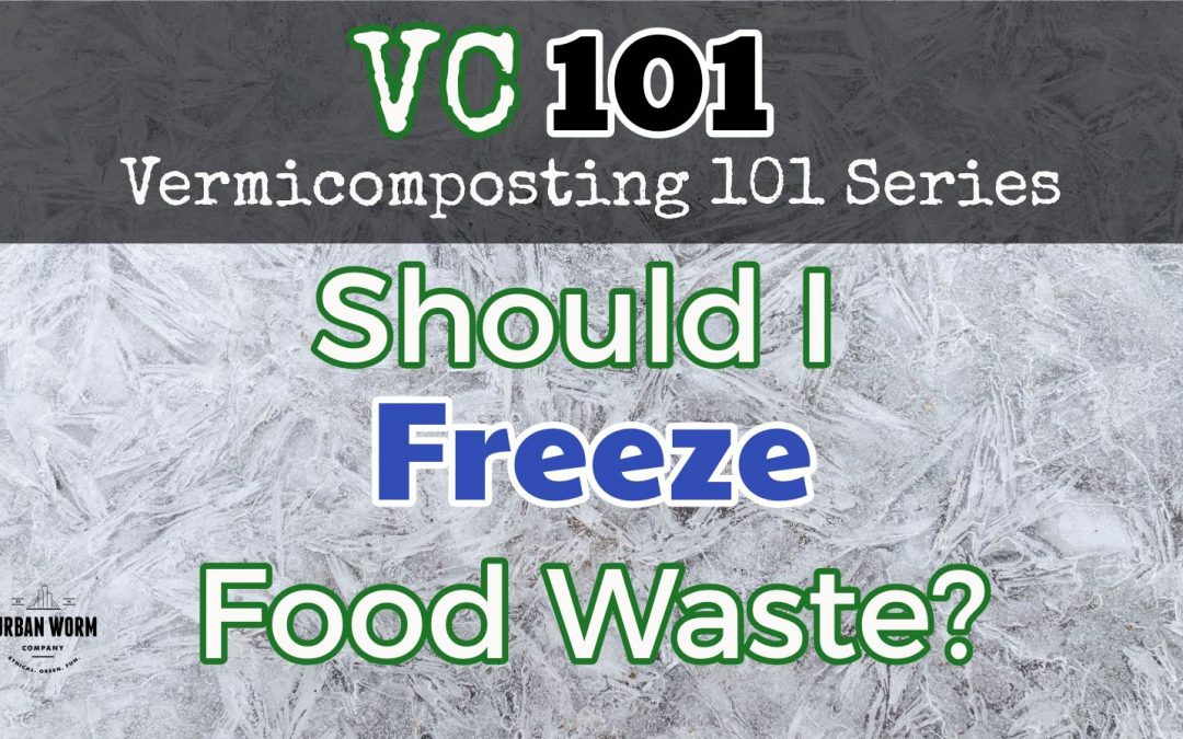 Vermicomposting 101: Freezing Food Waste for the Worm Bin. Is It Necessary?