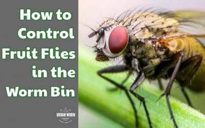 How to Prevent and Eliminate Fruit Flies in the Worm Bin