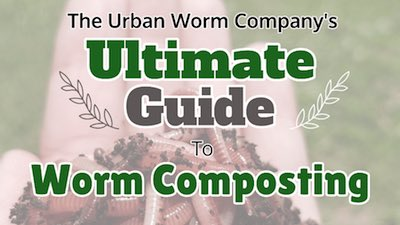 vermicomposting-guide