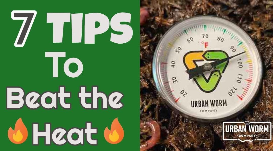 Hot Weather Vermicomposting: 7 Tips to Beat 100°F Temps